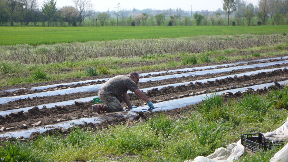 Angelo lavora sulla terra pacciamata