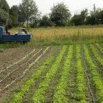 le insalate dell'orto